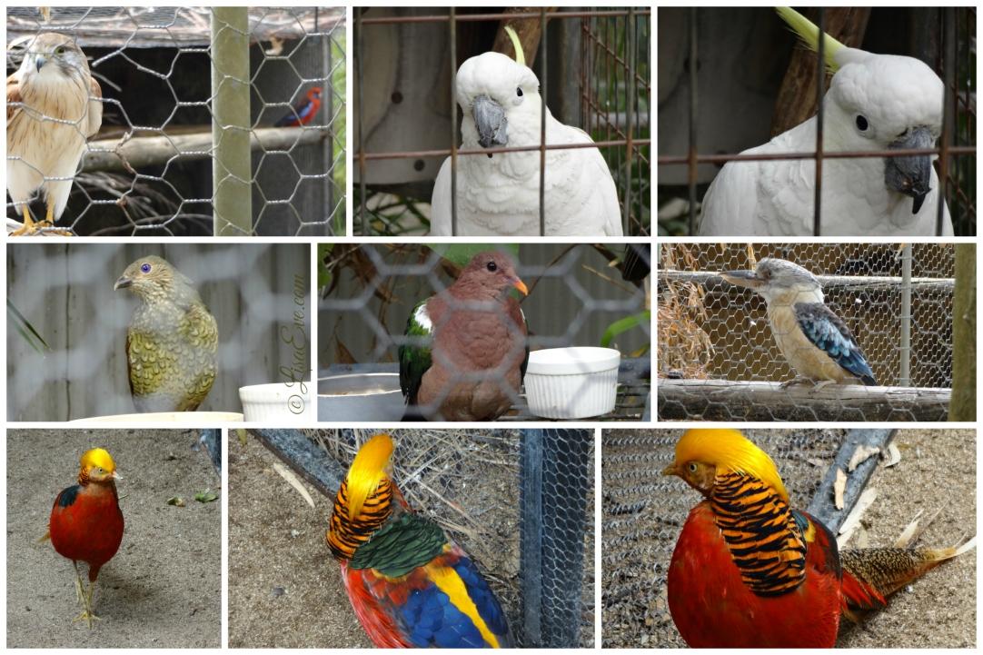 I love all varieties of birds!